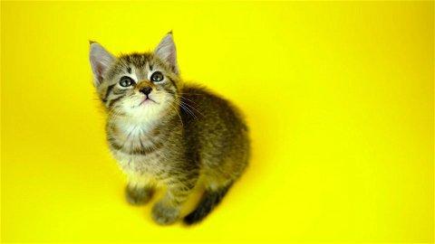 Советы по воспитанию котёнка